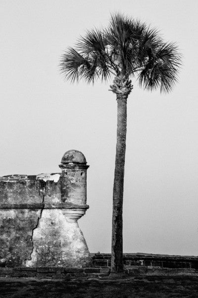 Black and white photograph of a towering palm tree on the lawn of the Castillo de San Marcos in St. Augustine, Florida.