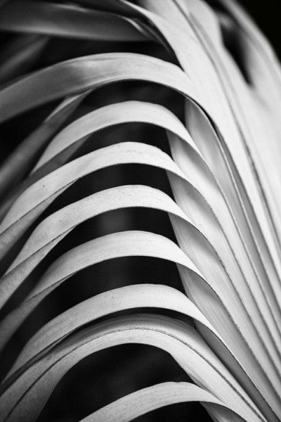Black and white abstracted photograph of dried palm leaves in a Florida forest.