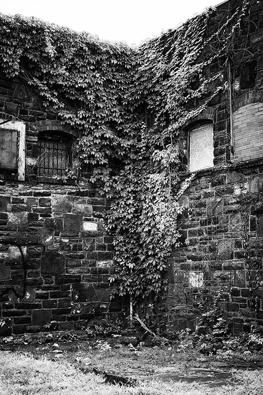 Black and white photograph of an abandoned industrial building overgrown with ivy