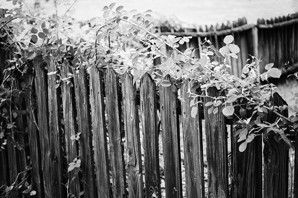 Black and white photograph of a wooden picket garden fence in Birmingham, Alabama.