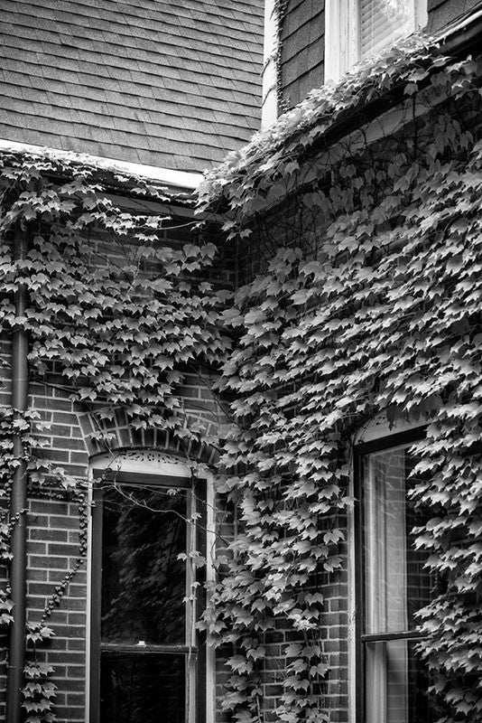Black and white photograph of the ivy-covered walls of an old house in the historic district of St. Charles, Missouri.