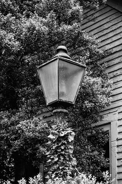 Black and white photograph of a vintage lamp draped in climbing ivy, in the lawn of a historic house in Franklin, Tennessee.