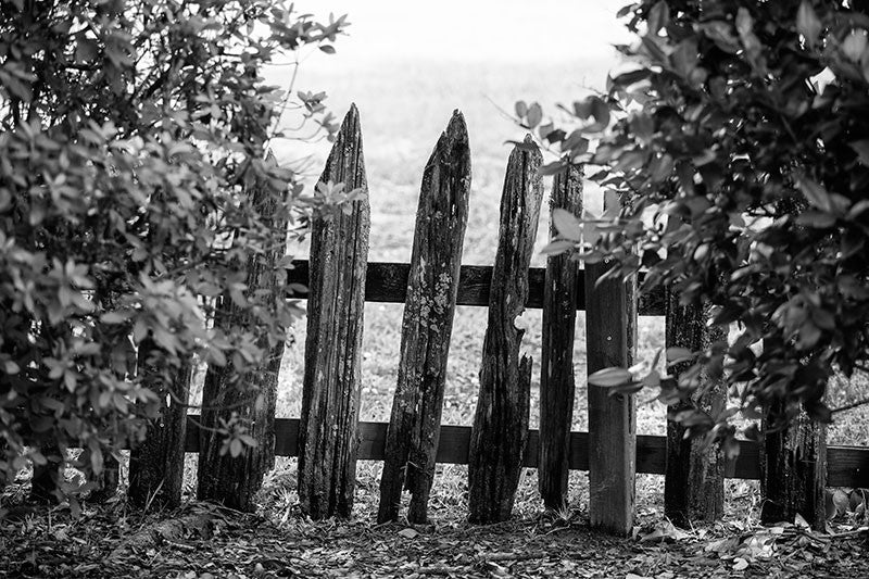Black and white landscape photograph of a weathered and uneven picket fence in Lafayette, Louisiana.