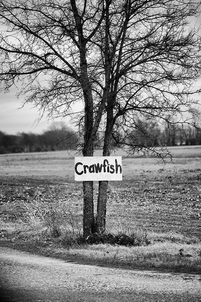 "Black and white landscape photograph of a tree with a hand-painted sign that says ""crawfish,"" in the Mississippi Delta region, near Tunica."