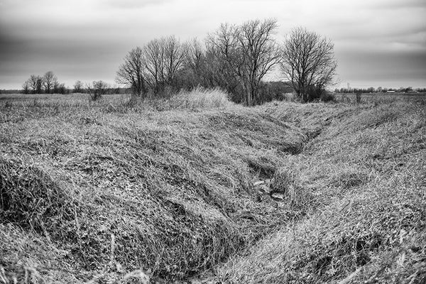 Black and white photograph of an overgrown creek bed in winter, near Clarksdale, Mississippi.