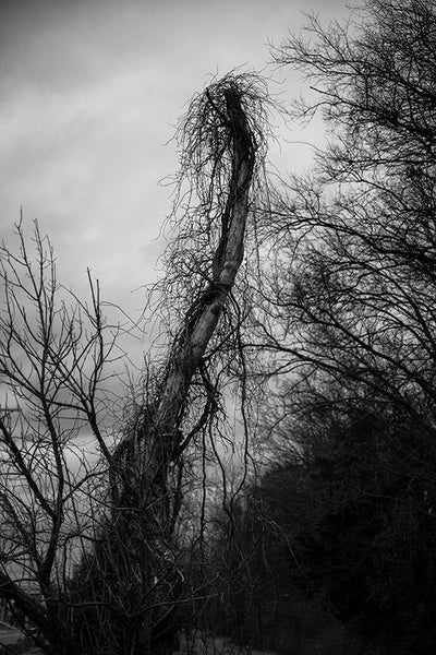 Moody black and white landscape photograph of a dead tree wrapped in a veil of barren climbing vines in winter.