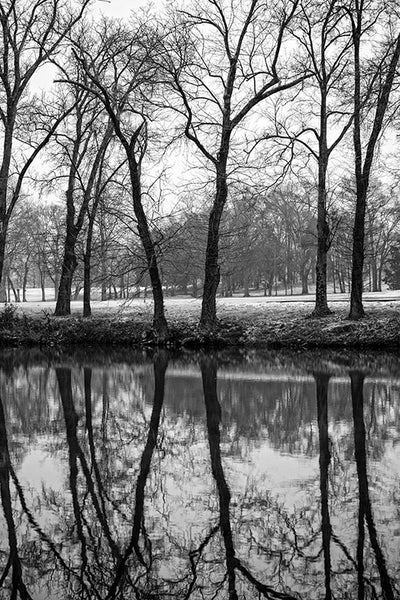 Black and white landscape photograph of a row of black trees reflecting in the dark Stones River on a winter day.