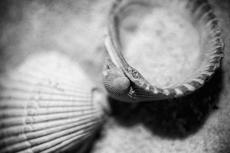 Black and white macro photograph of shells on the beach, with very short depth of field, sharply focused on the edge of the upturned shell, and going quickly out of focus.