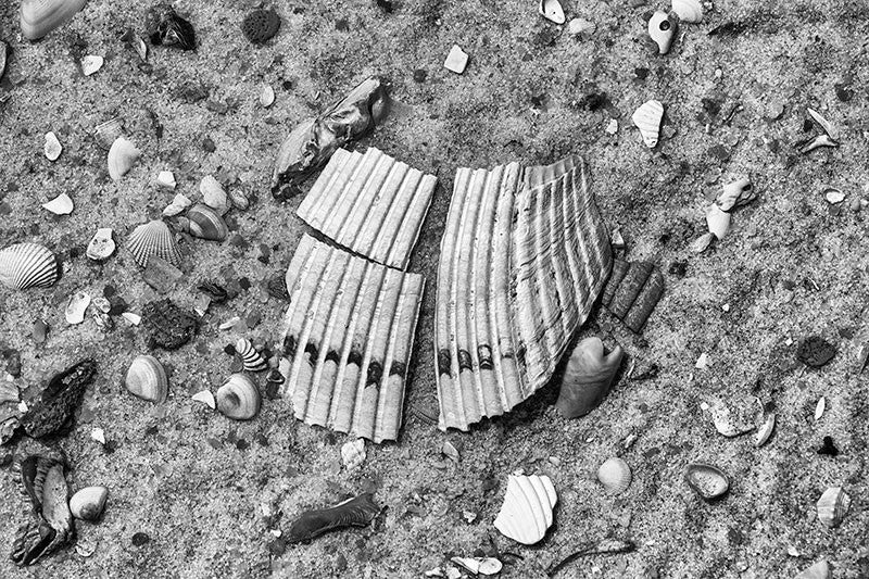 Black and white detail photograph of a large broken clam shell on the beach, surrounded by a scattered assortment of smaller shells.