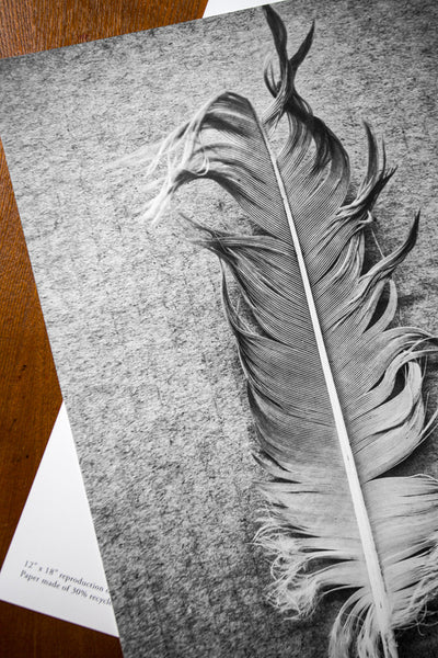 unframed black and white photo poster of feather detail