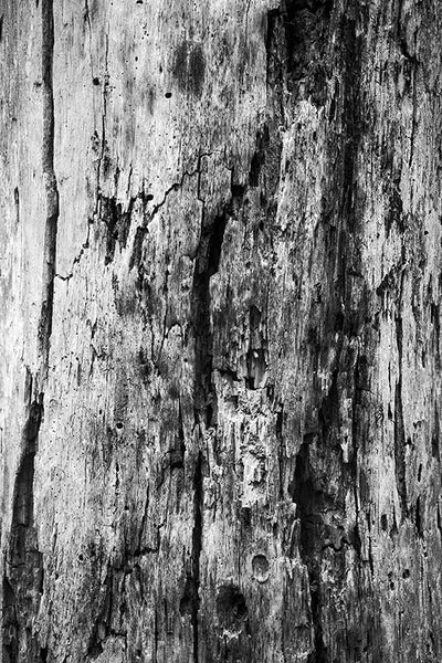 Decaying Tree Texture wall art photography