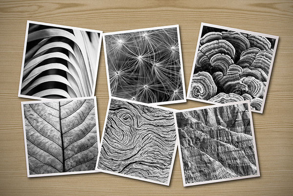Abstractions from Nature, Set of Six Themed Photographs on Card Stock, PhotoSquares