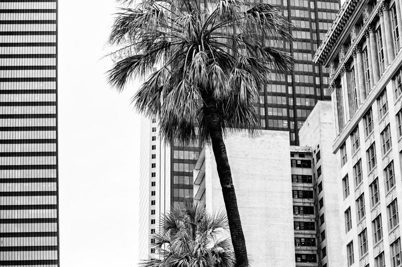 Black and white photograph of downtown Houston, where palm trees contrast against the rectangles of office buildings and modern skyscrapers.