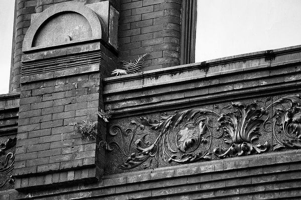 Black and white photograph ferns growing from the cracks of an ornate historic building circa 1891, located on King Street in Charleston, South Carolina.
