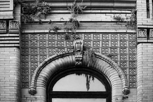 Black and white photograph of ferns growing from the ornate stonework of a historic storefront building from 1891, on King Street in Charleston, South Carolina.