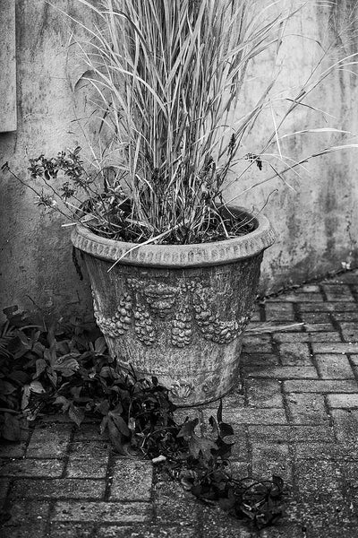 Black and white photograph of a quiet courtyard scene with a potted plant and creeping ivy in the stunning city of Charleston, South Carolina.