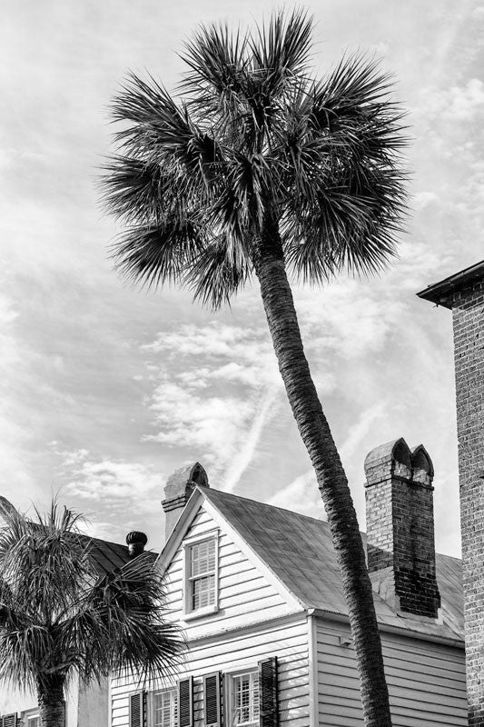Black and white photograph of Charleston rooftops with old chimneys and a tall palm tree.