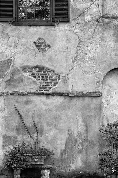 Black and white photograph of a beautifully textured old wall with climbing ivy on State Street in Charleston, South Carolina.