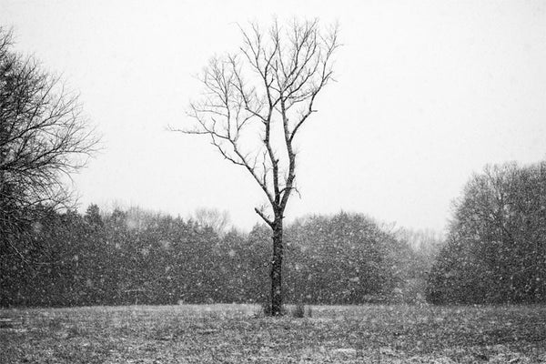 Black and white landscape photograph of a tree in the middle of an open field, amidst a veil of heavy falling snow.