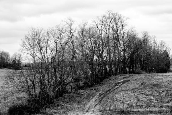 Black and white landscape photograph of a rutted dirt road running alongside an arc of barren winter trees that crest a low ridge.