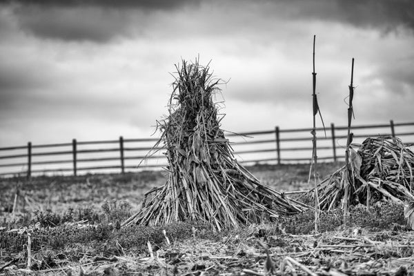 Black and white landscape photograph of a cornfield in winter, with a stormy sky heavy overhead.