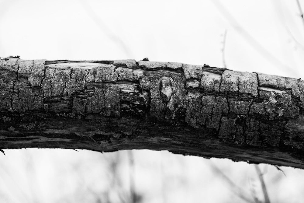Black and white detail photograph of the rough, cracked bark on a large fallen tree branch.