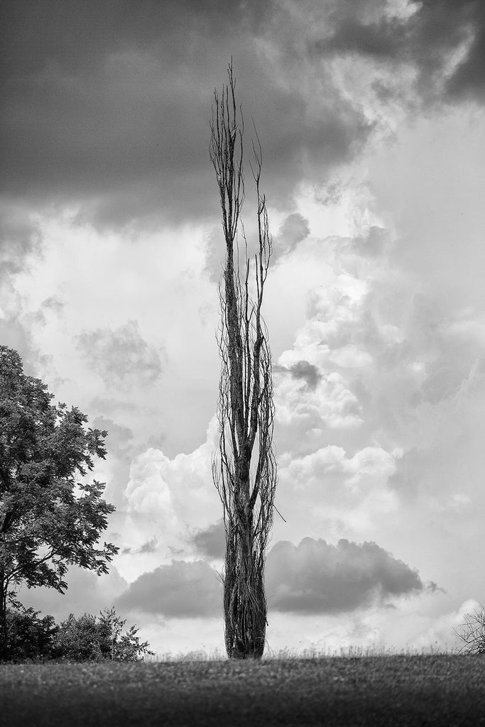 Black and white landscape photograph of tall, thin tree standing against the moody turmoil of a stormy sky.