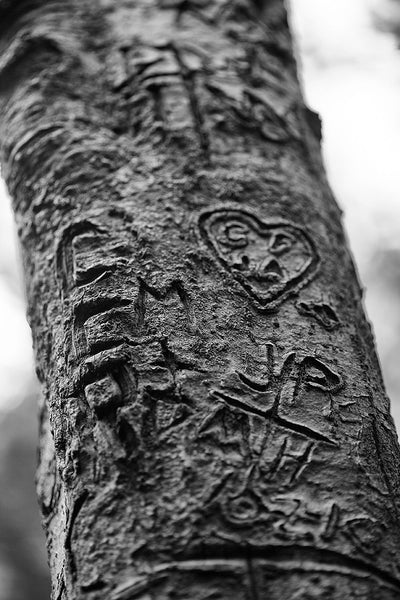Black and white photograph of hearts and initials carved into a tree along a forest hiking path.