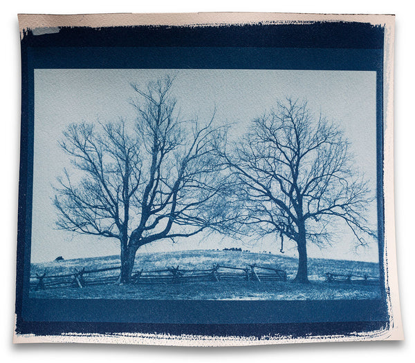Landscape with Two Barren Trees - Real Handmade Cyanotype Print