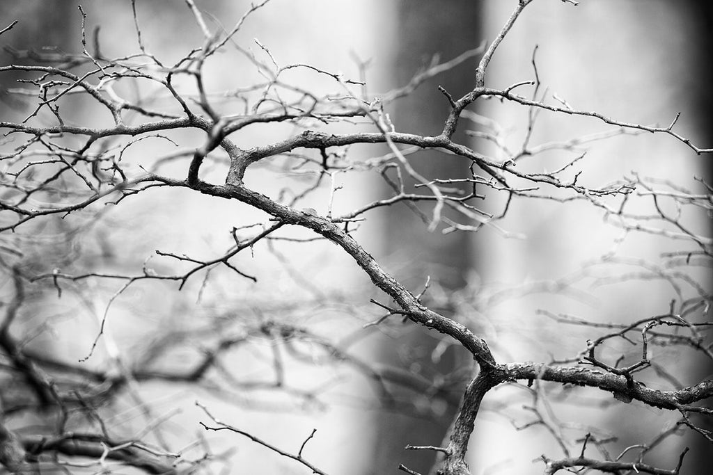 Black and white landscape photograph of a barren tree branch photographed in an atmospheric southern forest in winter.