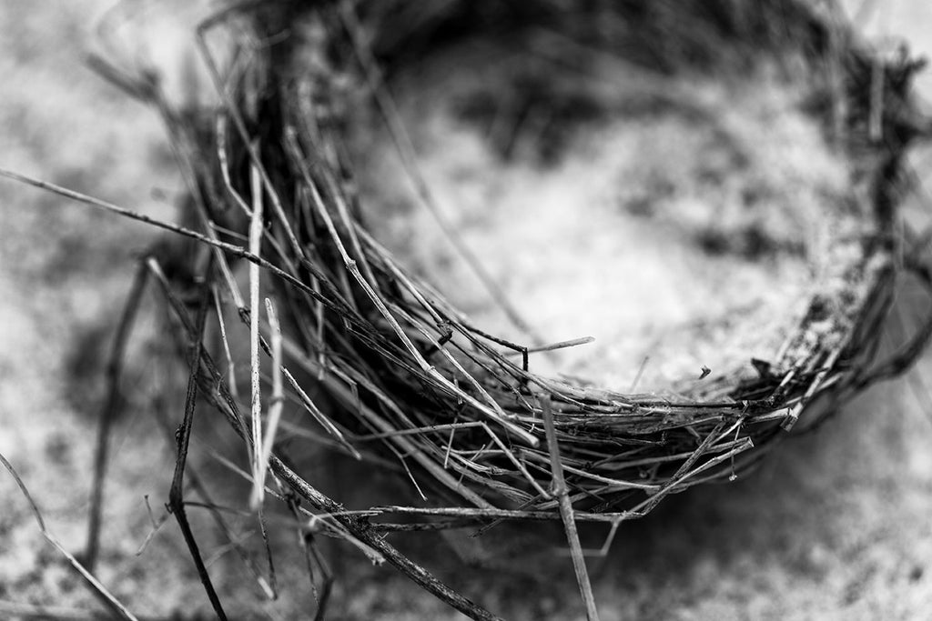 Black and white detail photograph of an abandoned bird's nest found in the snow on the ground
