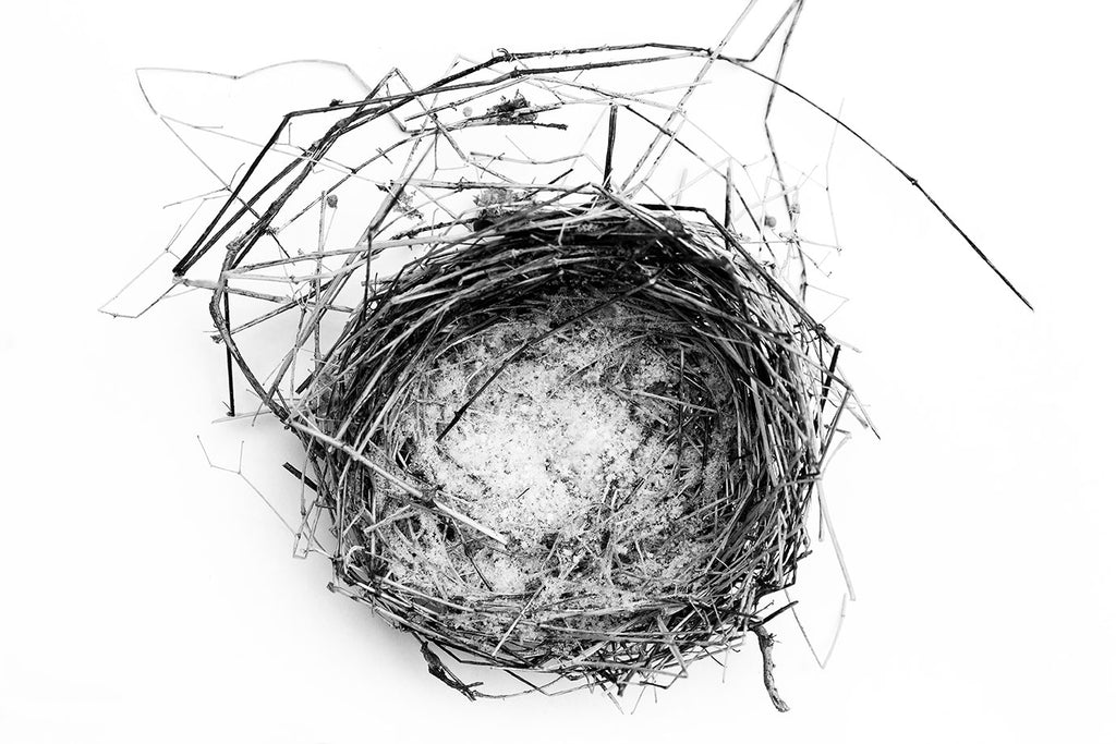 Black and white photograph of an abandoned bird's nest found in the snow