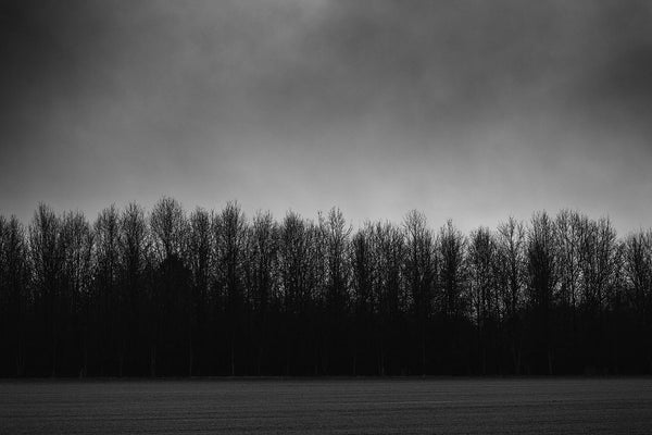 Dramatic black and white photograph of a line of black trees on a dark and rainy day.