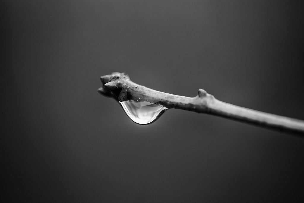 Black and white macro photograph of a glowing raindrop dangling from the end of a tree branch on a dark, gloomy day.