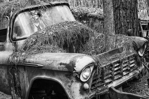 Black and white fine art photograph of a vintage American pickup truck abandoned in the woods with a pine tree growing through its engine compartment.