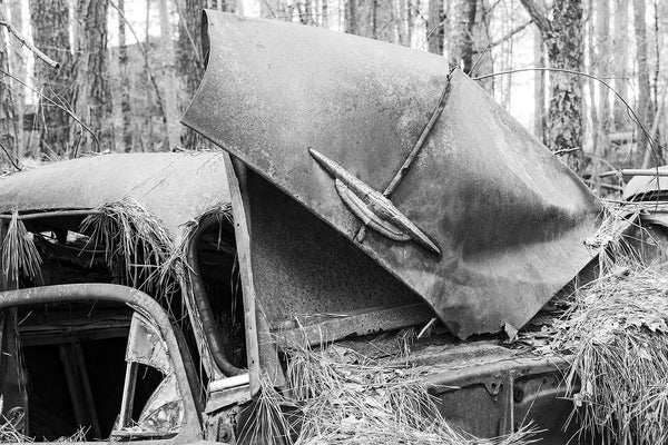 Black and white fine art photograph of a wrecked and rusty antique Chevy car covered in pine straw in the woods.