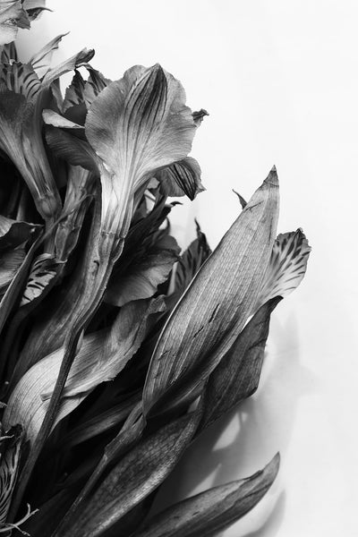 Black and white photograph of a bouquet of withering flowers that were found in a trash can.