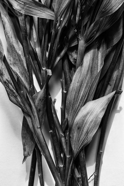 Black and white detail photograph of the textured stems and leaves from a withering bouquet of flowers that were found discarded in a trash can