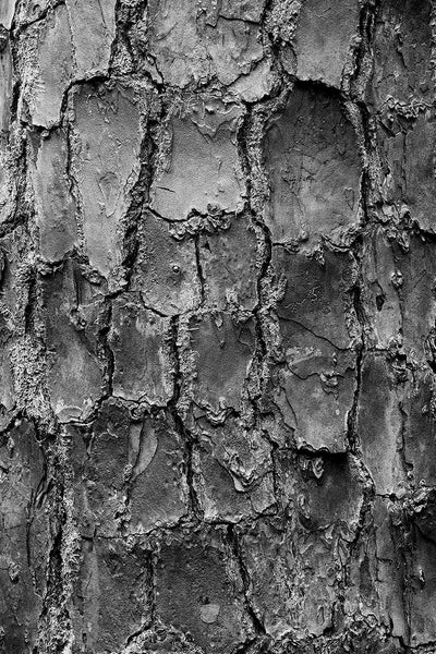 Black and white abstract fine art photograph of pine tree bark discovered in a southern forest