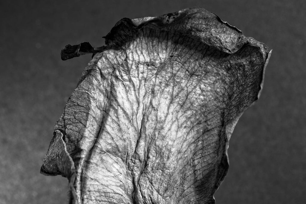 Black and white close-up detail photograph of the wrinkly surface landscape of a dried and withered rose petal.