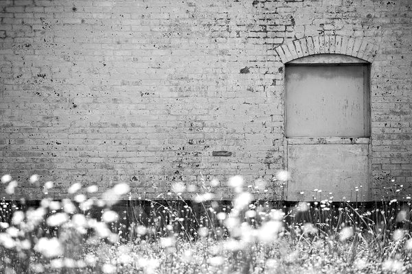 Black and white photograph of sunlit summer wildflowers growing in a vacant lot next to the painted brick wall of a historic old building.