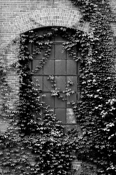 Black and white photograph of an ivy-covered window on an old southern textile mill, built in 1902 and closed in the 1990s.