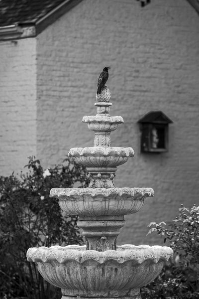 Black and white photograph of a blackbird perched atop a water fountain in the courtyard of a historic home in picturesque Ste. Genevieve, Missouri.