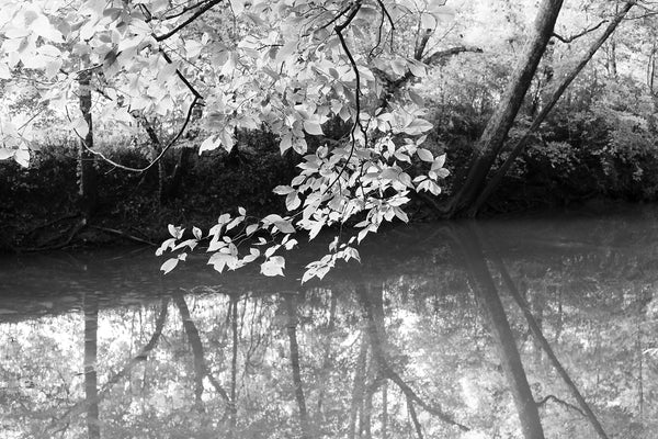 Summer at Spring Creek Black and White Landscape Photograph