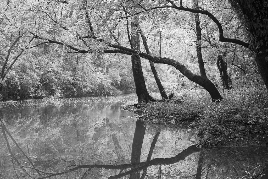 Black and white landscape photograph of a lazy rolling creek and big, black trees glowing in late summer sunlight.