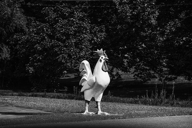 Black and white photograph of a large fake rooster on the side of the road in rural northern Alabama.