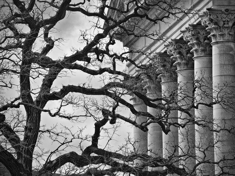 Black and white photograph of a gnarled tree branches juxtaposed against the ordered Corinthian columns of the Wisconsin State Capitol.