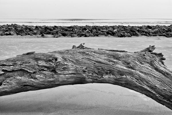 Curved Log on Beach on Jekyll Island, Georgia (IMG_4206)
