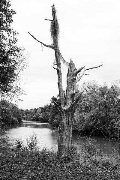 Black and white landscape photograph of a dead tree with Spanish moss draped across it's barren branches positioned on a bluff overlooking a winding river.