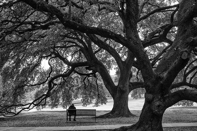 Black and white photograph of a shady park bench under the embrace of two mighty oaks in Houston, Texas.